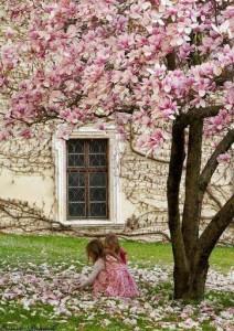 blog magnolia